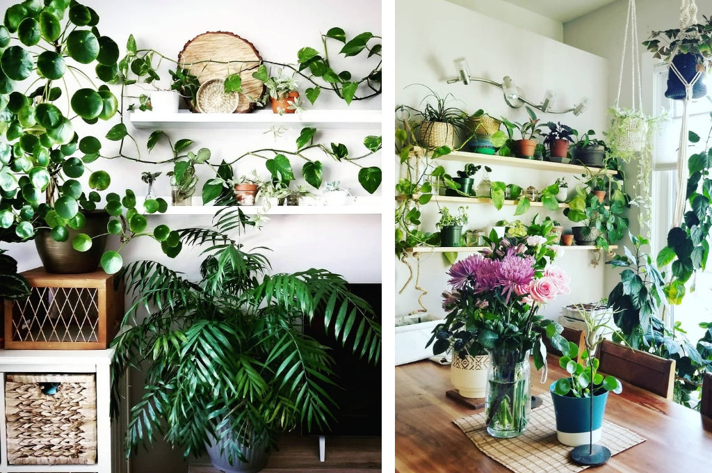 Greenery Design by Plant Roost